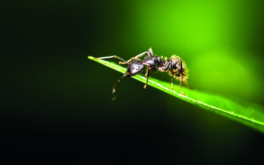 FaWo®Eco – Desinfektionsmittel auf Basis von Ameisensäure