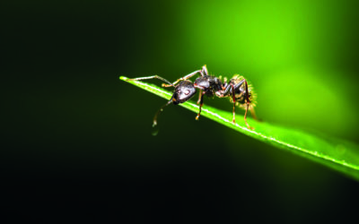 FaWo Eco - Auf Basis von Ameisensäure